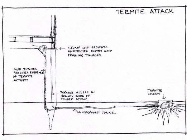 how termites attack