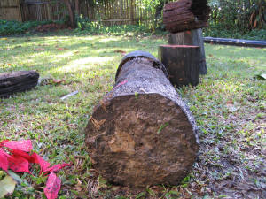 wood stump with termite damage