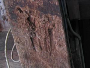 termite ant cap