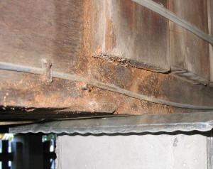 Termite trails in home
